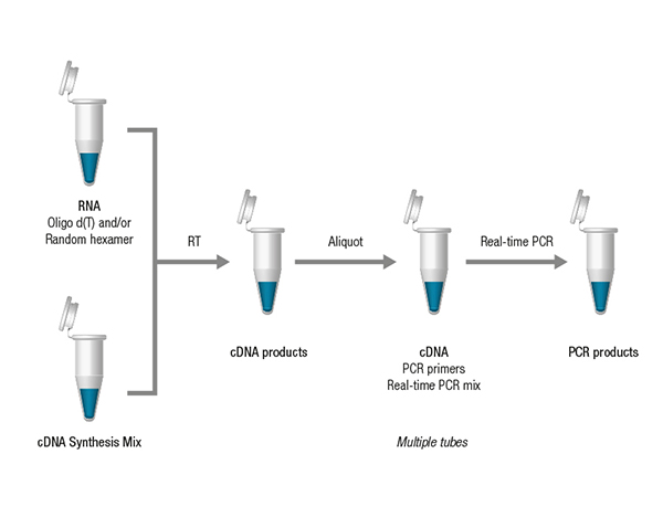 two step real time pcr flexible