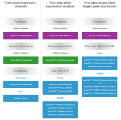 Plant Expression Research Workflow